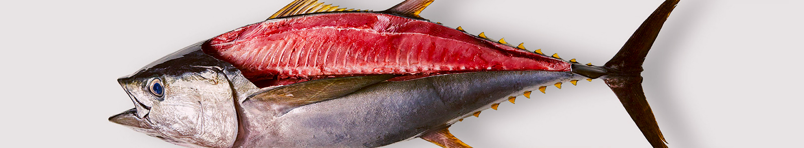 maldives yellowfin tuna suppliers ensis fisheries